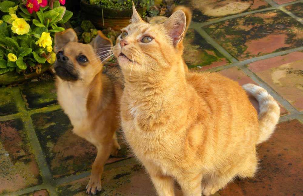 Pico & Rusty