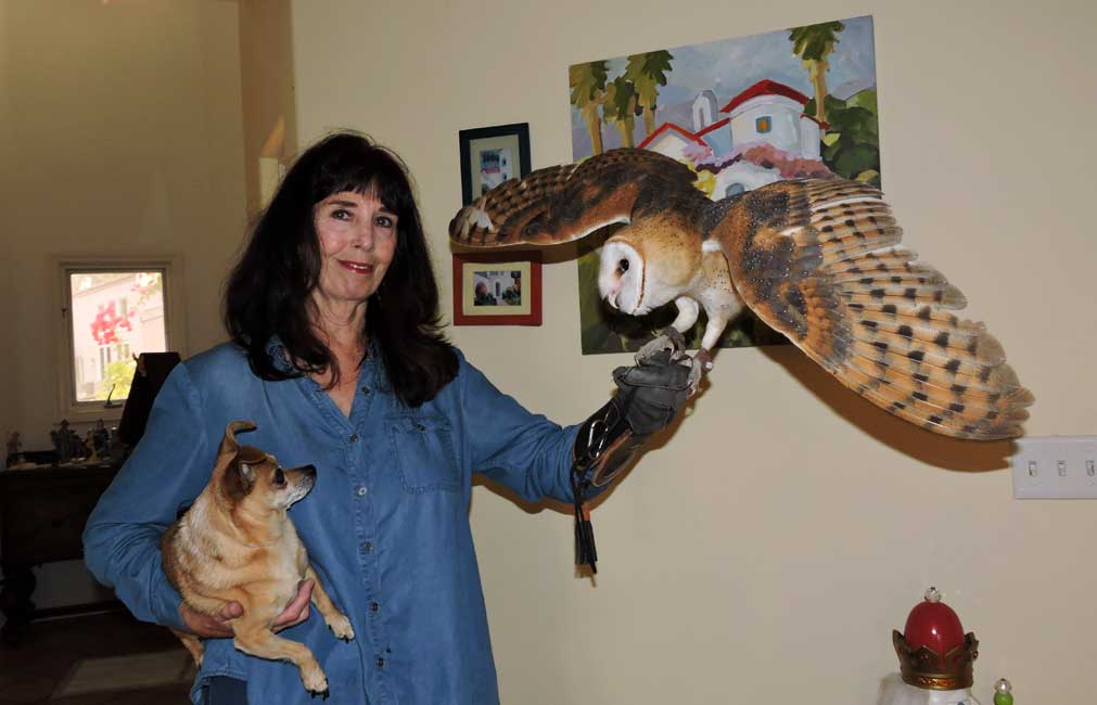 Athena the Barn Owl - visiting after being evacuated